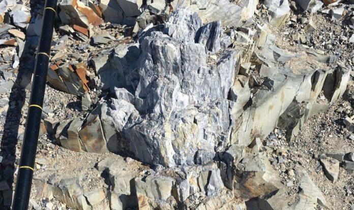 Árvores fossilizadas foram encontradas nos Montes Transantárticos da Antártica
